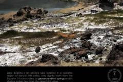Life11-Lake-Bogoria-1