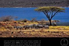 Life21-Lake-Bogoria-3